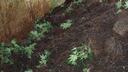 Derde Truiense groenarbeider gearresteerd voor drughandel