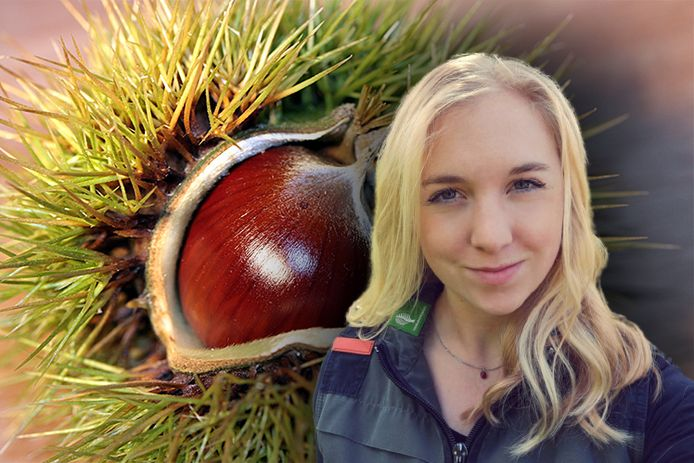 Boswachter Amy Zeeman is kritisch op bosbezoekers die grote hoeveelheden kastanjes of walnoten meenemen.