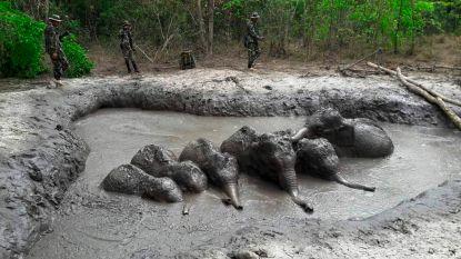 Zes babyolifantjes gered uit modderpoel in Thailand