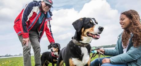 Hondenbelasting op de helling, al zal afschaffing nog wel even duren