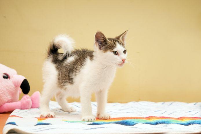 Gedumpt kitten, nu veilig in het dierenasiel in Gorinchem.