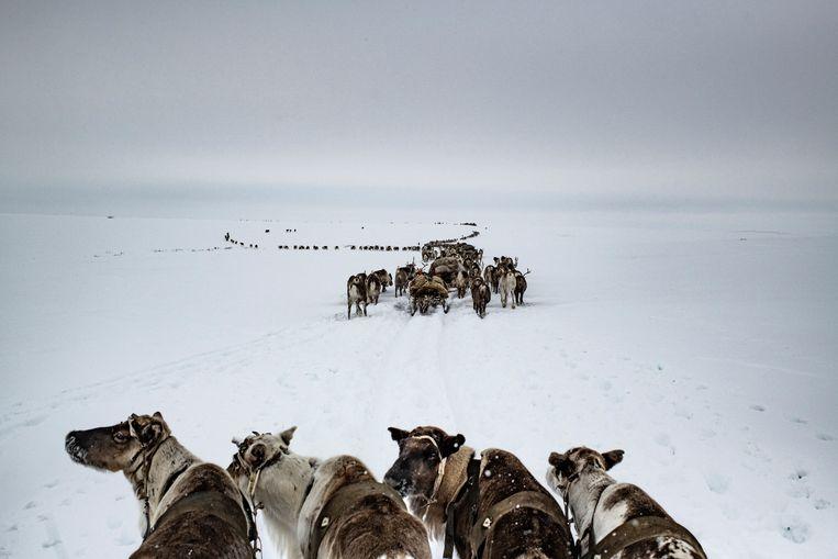 Het Russische schiereiland Jamal, april 2018. De inheemse Nenetsnomaden, die hier leven van rendierveeteelt, staan onder druk van de olie- en gasindustrie.  Beeld Yuri Kozyrev / NOOR