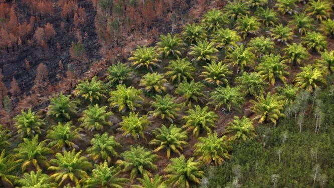 Sri Lanka verbiedt invoer en teelt van palmolie