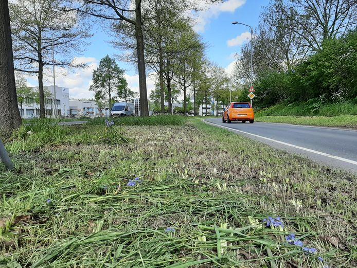 De Kortenoord Allee in Wageningen. Op de voorgrond is gemaaid. Op de achtergrond staan nog wel planten in de middenberm.