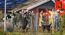 De  schuur van een hondenfokkerij aan de Havezatheweg in Hasselt is uitgebrand. Daarbij zijn 12 honden omgekomen.
