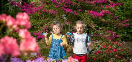 Het is weer rododendrontijd in het Belmonte Arboretum