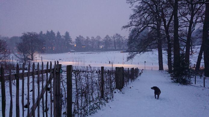 De hond van Yvette Tokic steekt goed af tegen de sneeuw in Park Klarenbeek in Arnhem