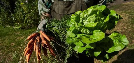Zijn zelfgekweekte groenten gezonder dan groente uit de winkel?