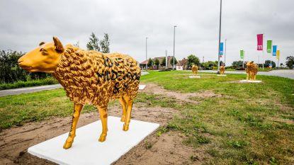 Gouden schapen op rotonde (en dat is nog maar het begin)