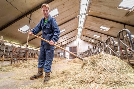 Als de koeien van Dirk Gravesteyn de stal binnenkomen ligt het hooi klaar.
