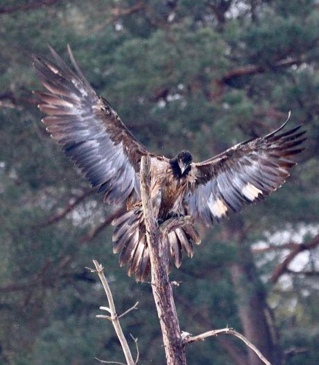 Eglazine is een sensatie, maar gieren zijn hier steeds vaker te gast