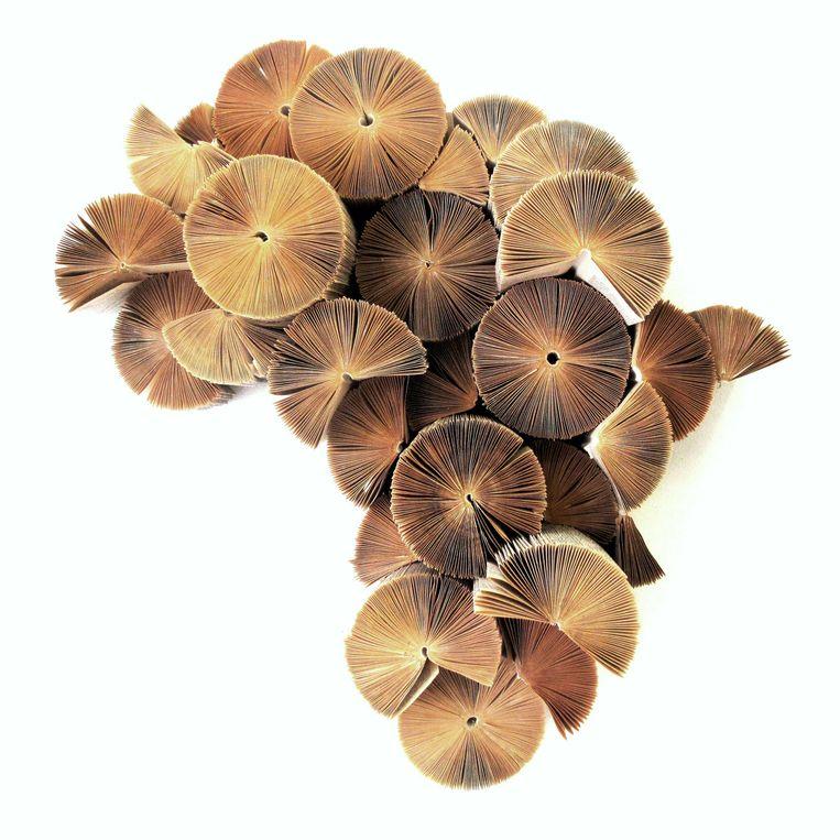 papierkunst Keri Muller maakt werken van boeken. 'Africa Re-invented' in diverse maten. 45 x 60 x 15 cm voor € 349,95. fromafricawithlove.nl Beeld Anne Dokter