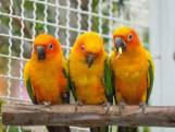 23-25 november: Vogeltentoonstelling in Hulst