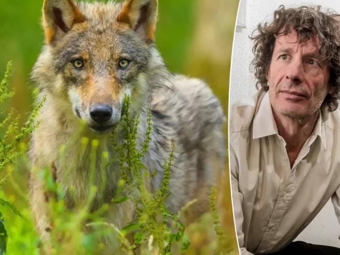 """Dirk Draulans over de 'probleemwolf': """"Boeren moeten niet komen janken maar zich aanpassen"""""""