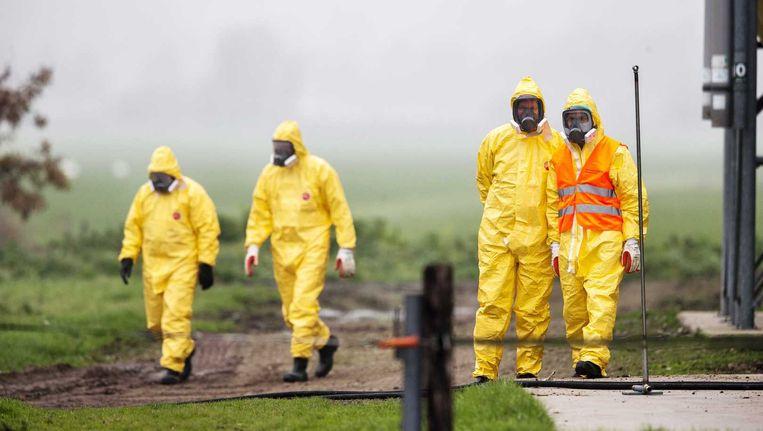 Leden van een ruimploeg troffen in november nog grote voorbereidingen bij een legpluimveebedrijf in het Nederlandse Zoeterwoude waar vogelgriep werd vastgesteld. De 28.000 kippen op het bedrijf werden afgemaakt. Beeld ANP