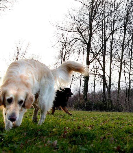 Honden mogen lekker rennen naast Dolfinarium