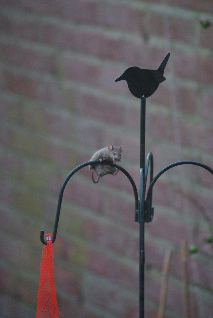 Muizen komen op eten af, zoals vogelzaden.