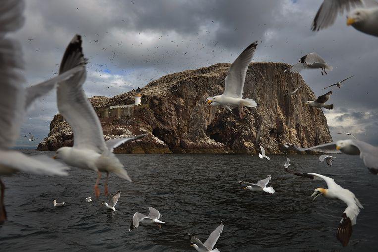 De levens van de vrouwen in Wij zijn de wolven spelen zich af in de buurt van de Schotse rotsformatie Bass Rock.  Beeld Getty Images