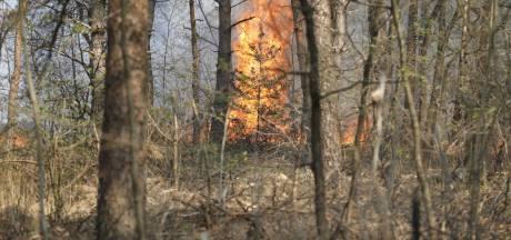 Bewoners nabij natuurbrand Schijf komen met schrik vrij: 'Ik zag de lucht ineens goud kleuren'