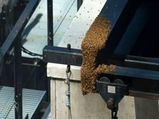 Duizenden bijen strijken neer op Times Square