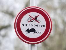 Coördinator rattenbestrijding Bilthoven: 'Nog nooit meegemaakt dat overlast niet stopte'