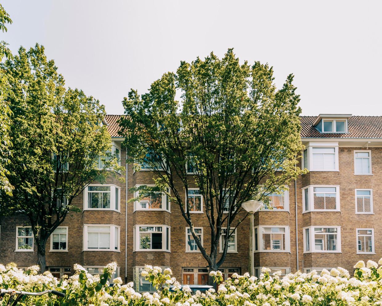 De Van Walbeeckstraat in Amsterdam. Beeld Rebecca Fertinel