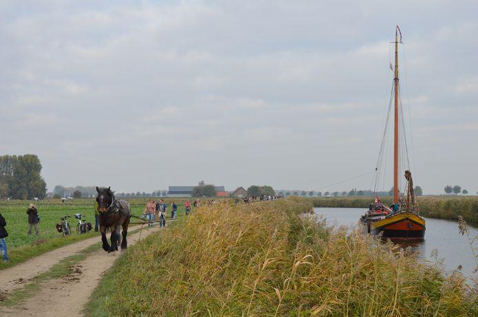 Een trekpaard sleept een historisch schip voort richting de haven van Steenbergen.