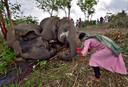 Een Indiase vrouw legt bloemen bij de karkassen van de omgekomen olifanten.