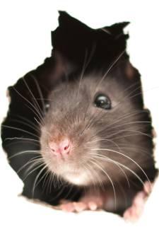 Rat keek Sonja vanuit de wc-pot aan: 'Ik durfde heel lang niet meer naar de wc'