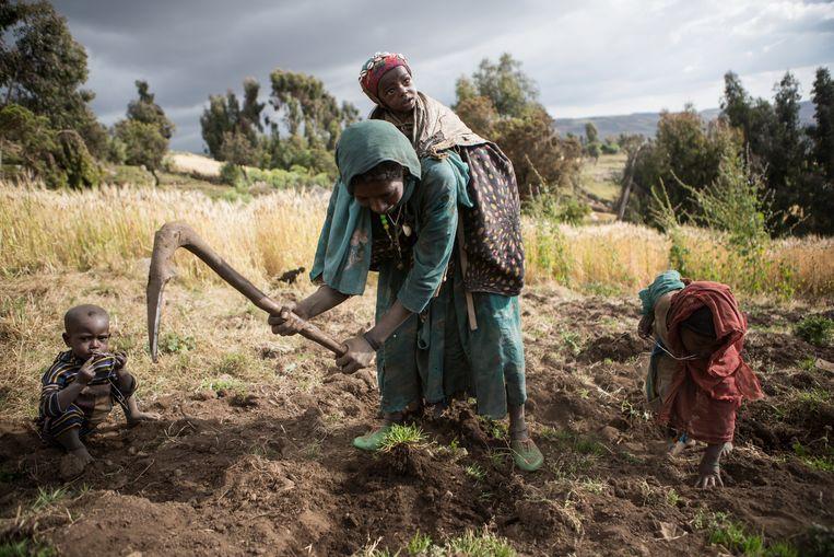 Ethiopische boeren in het Simien-gebergte.  Beeld Julius Schrank