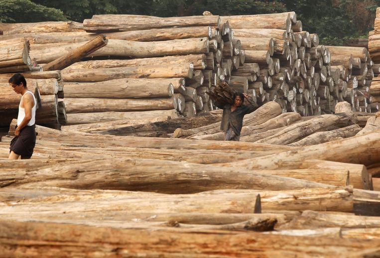 Arbeiders in Myanmar bezig met het verwerken van bomen uit de regenwouden.  Beeld EPA