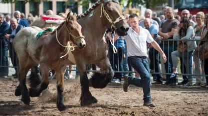 70ste Leuvense jaarmarkt kiest voor traditie, feest en extra veiligheid