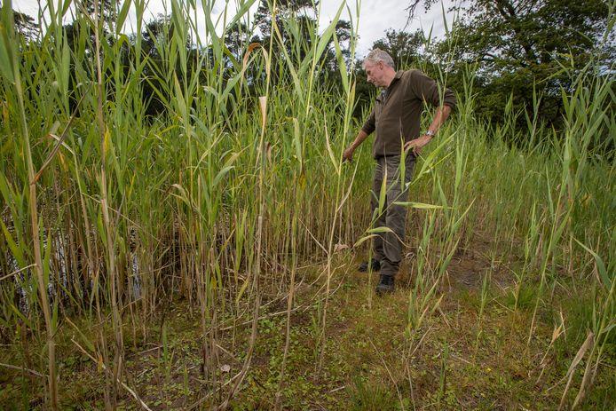 Boswachter Michiel Schaap bekijkt de gevolgen van aanhoudende droogte voor de natuur op De Velhorst. Dit vennetje is bijna helemaal drooggevallen.