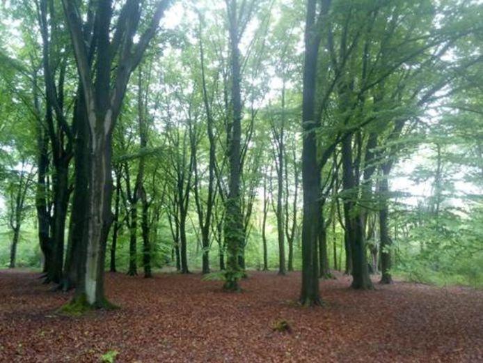 Het Ter Loke-bos