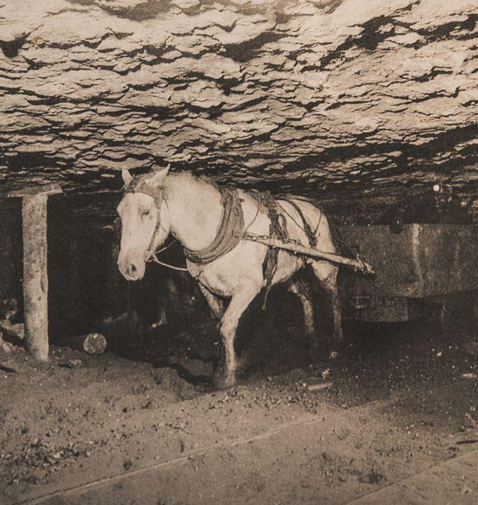 Een paard aan het werk onder de grond.