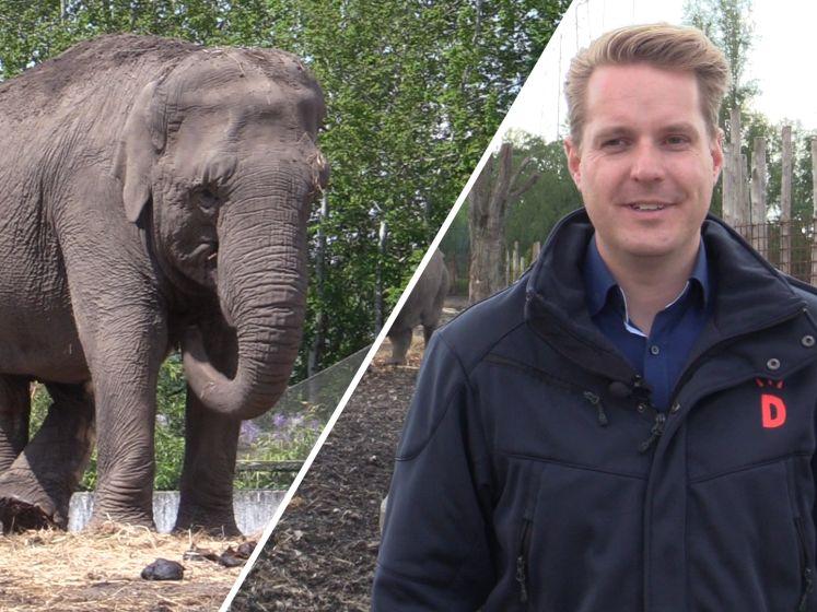 Hoe bereidt deze dierentuin zich voor op de heropening?