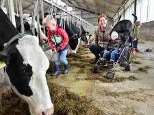 Hoe als boer te overleven: 'Melkprijs ligt al 40 jaar stil'