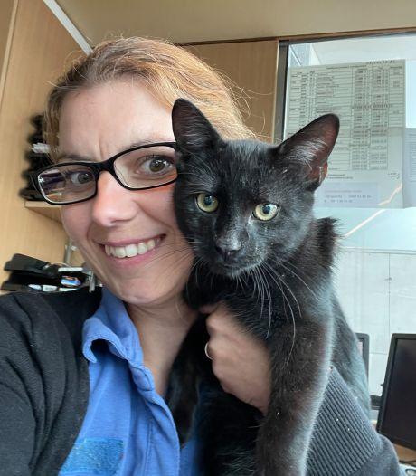 Politie zoekt eigenaar van gevonden kat