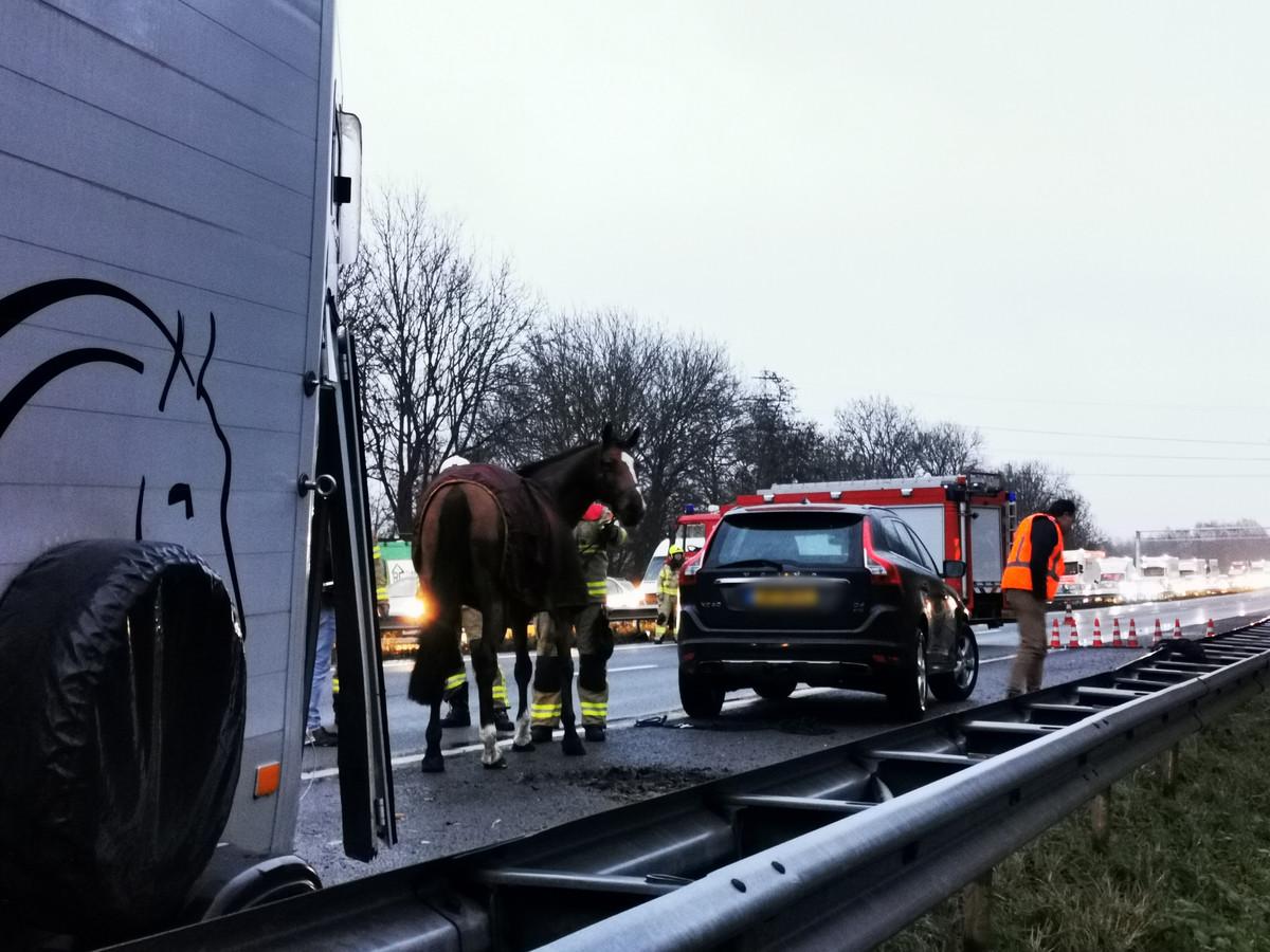 Het paard ontsnapte uit een trailer op de A12 tussen Arnhem en de Duitse grens.
