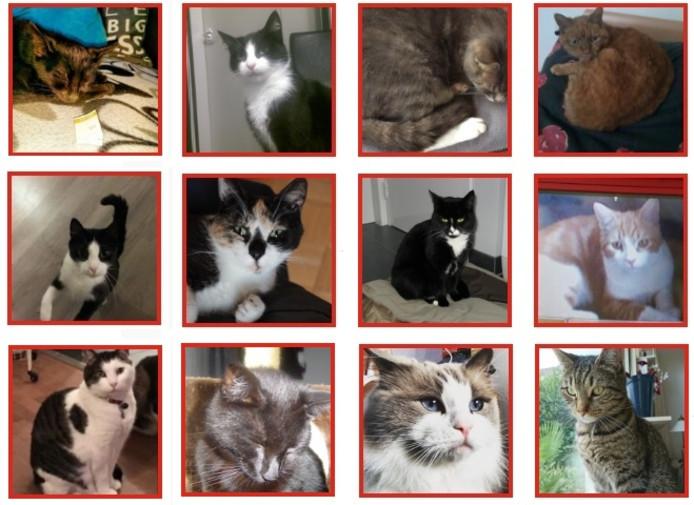 Vermiste katten op Walcheren