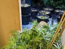Hennepkwekerijen en growshop ontmanteld