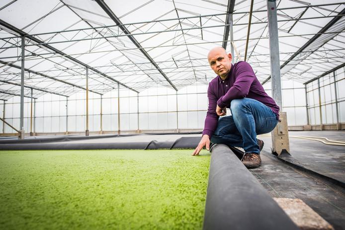 Hans Roelofs kweekt waterlinzen in Huissen.