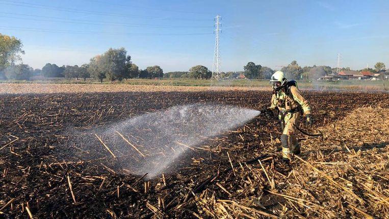 Het afgereden maïsveld ging grotendeels in vlammen op.