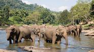 Zeven wilde olifanten geëlektrocuteerd door slappe hoogspanningslijn in Oost-India