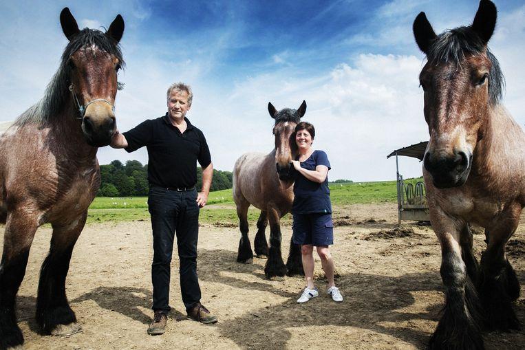 Alain en Sandra Moreels : '70 paarden hebben we, en we kennen ze allemaal bij naam.' Beeld tim dirven