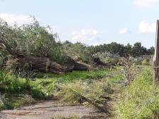 Nudepark 2 Wageningen krijgt honderd bomen terug
