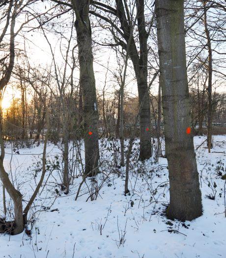 Bijl gaat in duizenden zieke bomen in Bernissegebied: 'Er ontstaan grote open plekken'