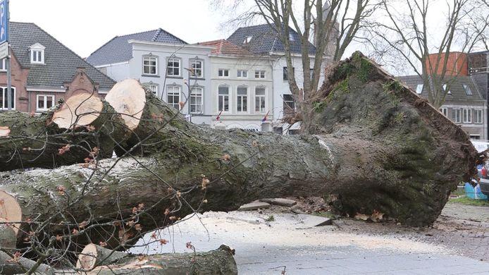 Een moeder en haar baby werden geraakt door een omgewaaide boom op de kruising van het Hinthamereinde met de Zuid-Willemsvaart.