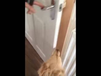 Prachtig: hond en baasje herenigd na 7 maanden
