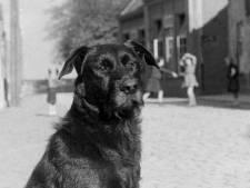 Hondenbelasting niet meer van deze tijd? Ooit was er ook belasting op biljarts en bomen